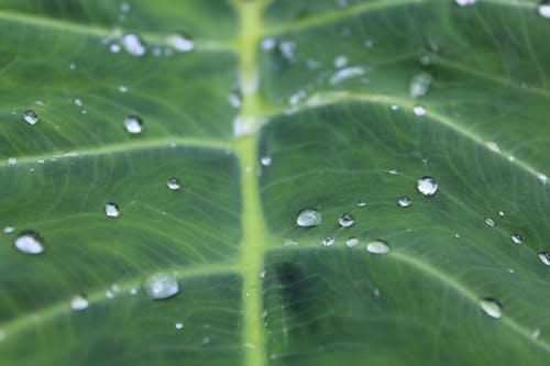 Leaf With Water Dew on Top