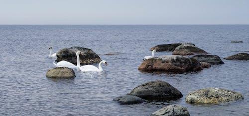 Gratis stockfoto met baai, blikveld, daglicht, h2o