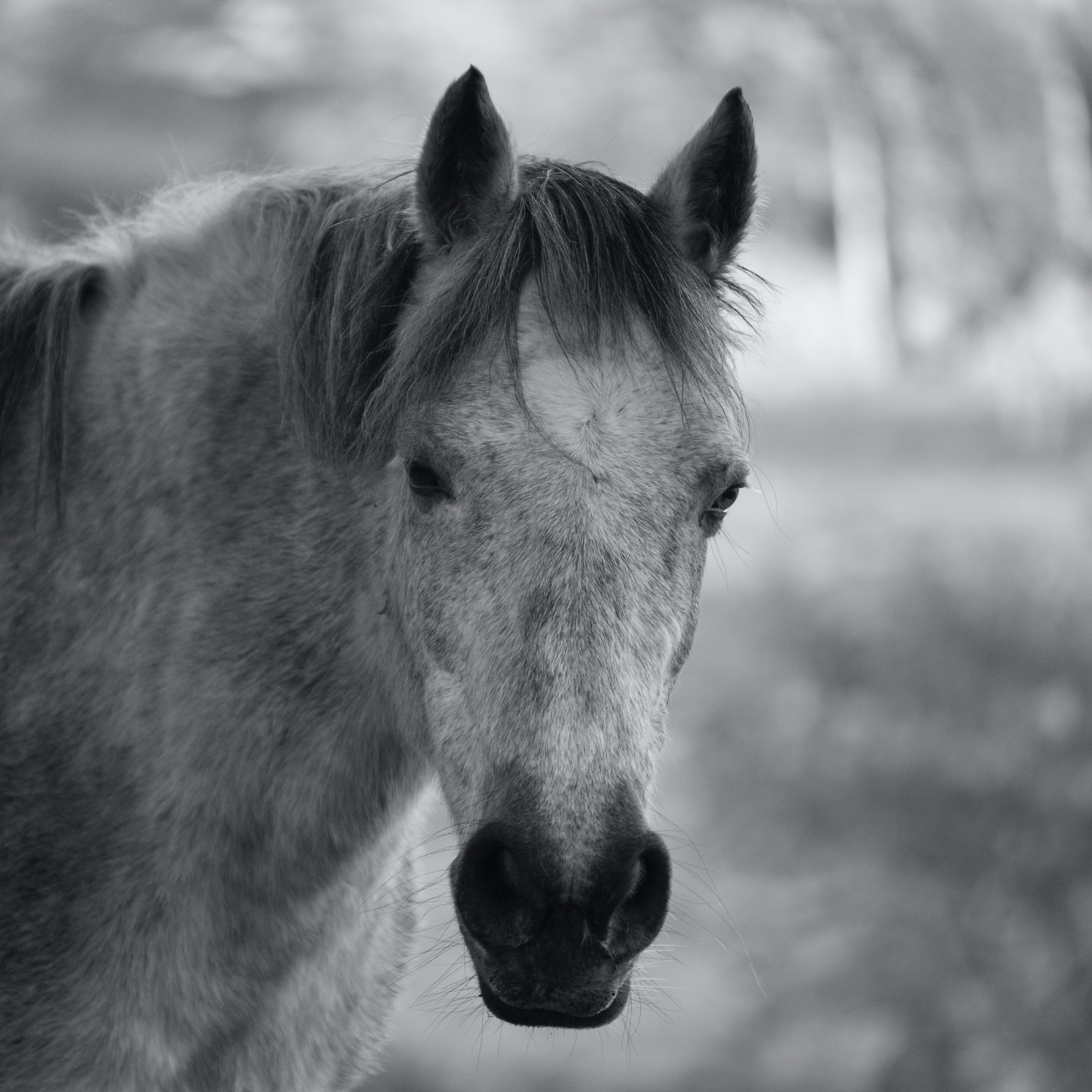 Horse Head Grayscale Photo