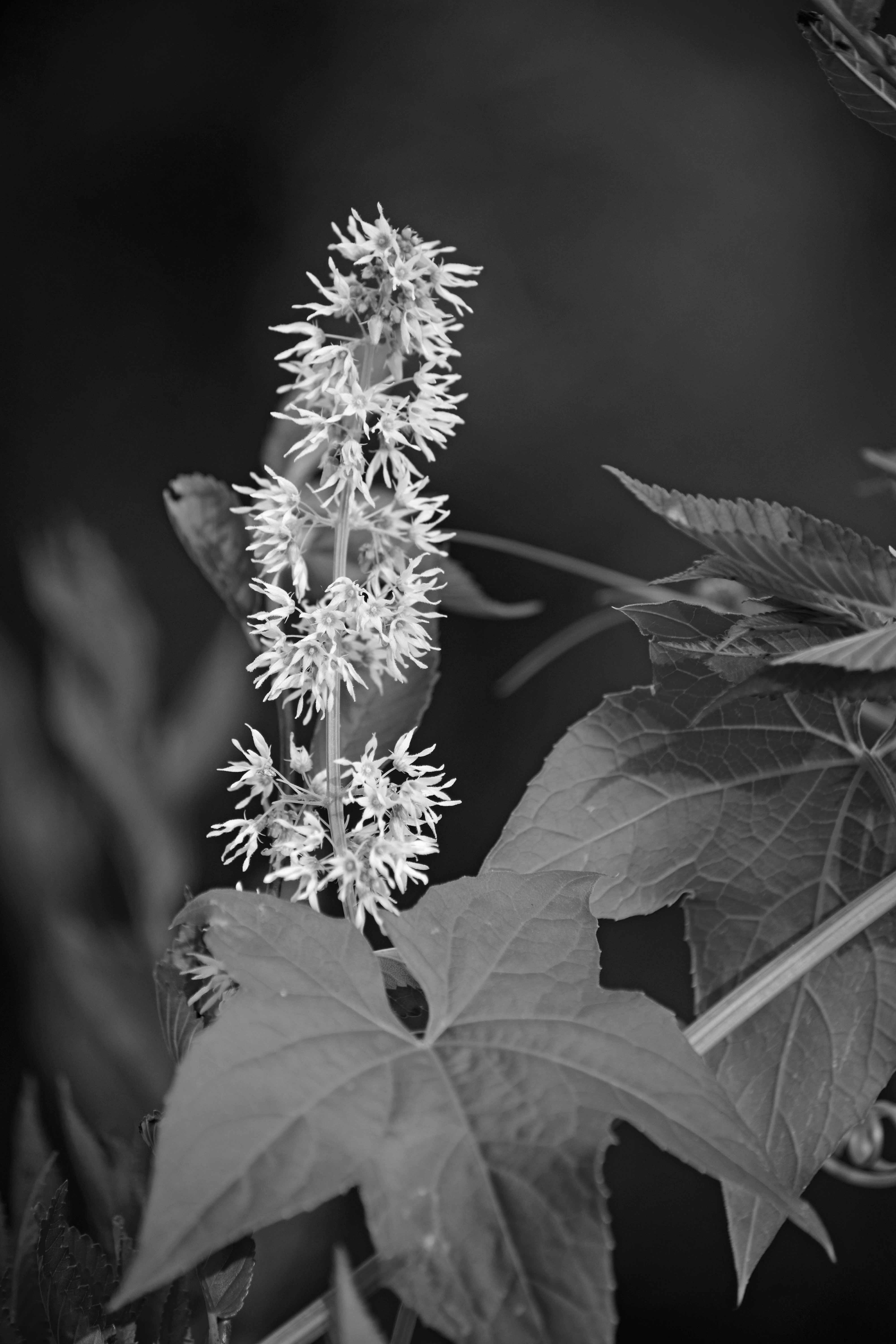 Greyscale Photography of Clustered Flowers