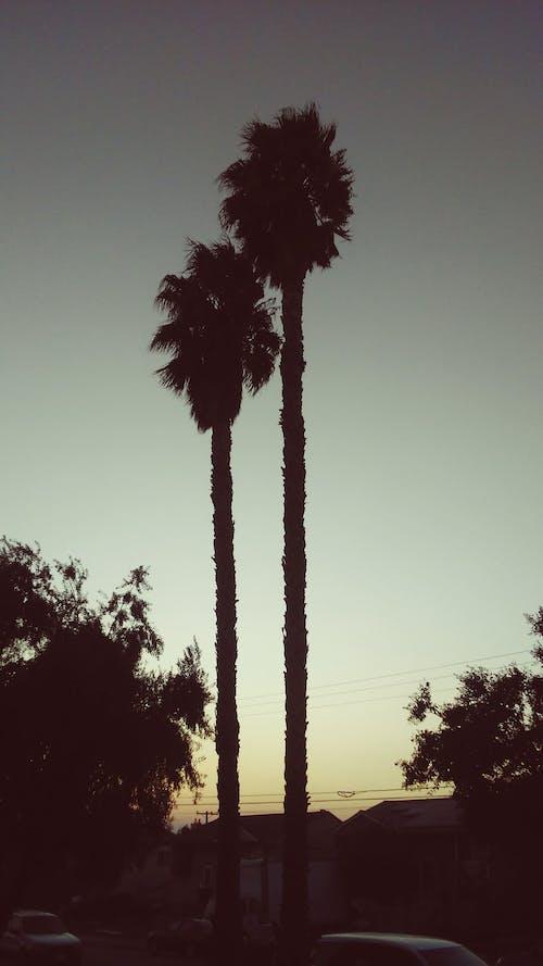 Free stock photo of Dark Sky, gray sky, grey sky, palm tree
