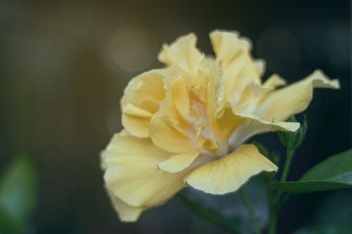 宏觀, 植物群, 特寫, 綻放 的 免費圖庫相片