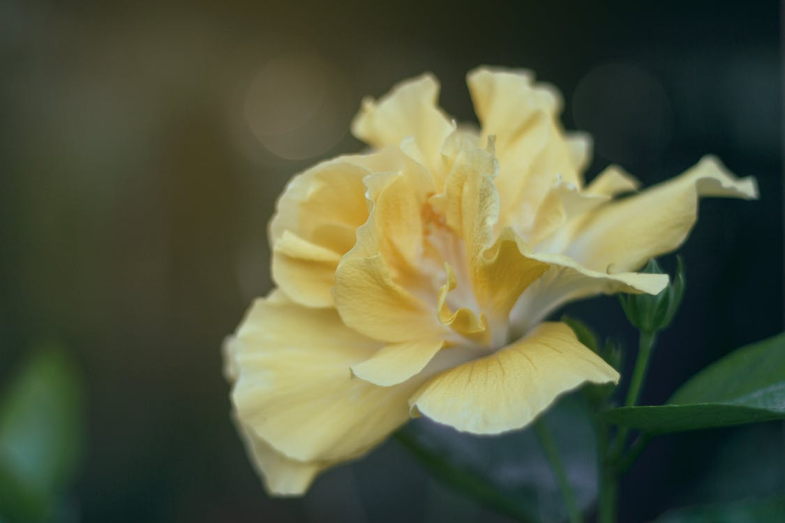 blomst, blomstre, flora