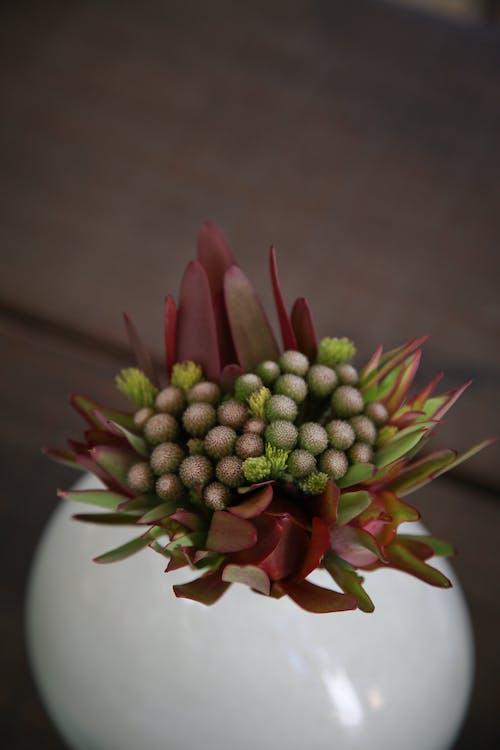 Foto d'estoc gratuïta de boda, color, flors, funció
