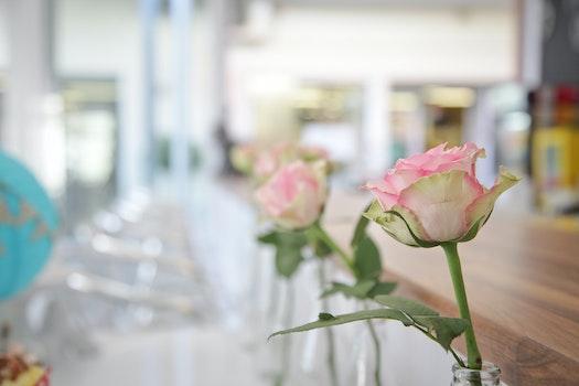 Pink Rose on Bottle Decor