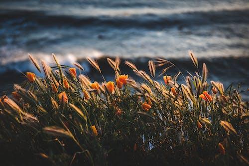 Photo of golden flowers beside body of water