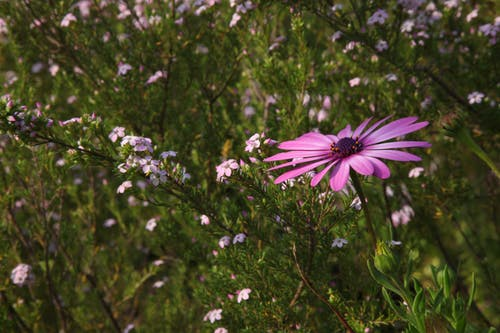 Foto d'estoc gratuïta de flora, florir, flors, natura