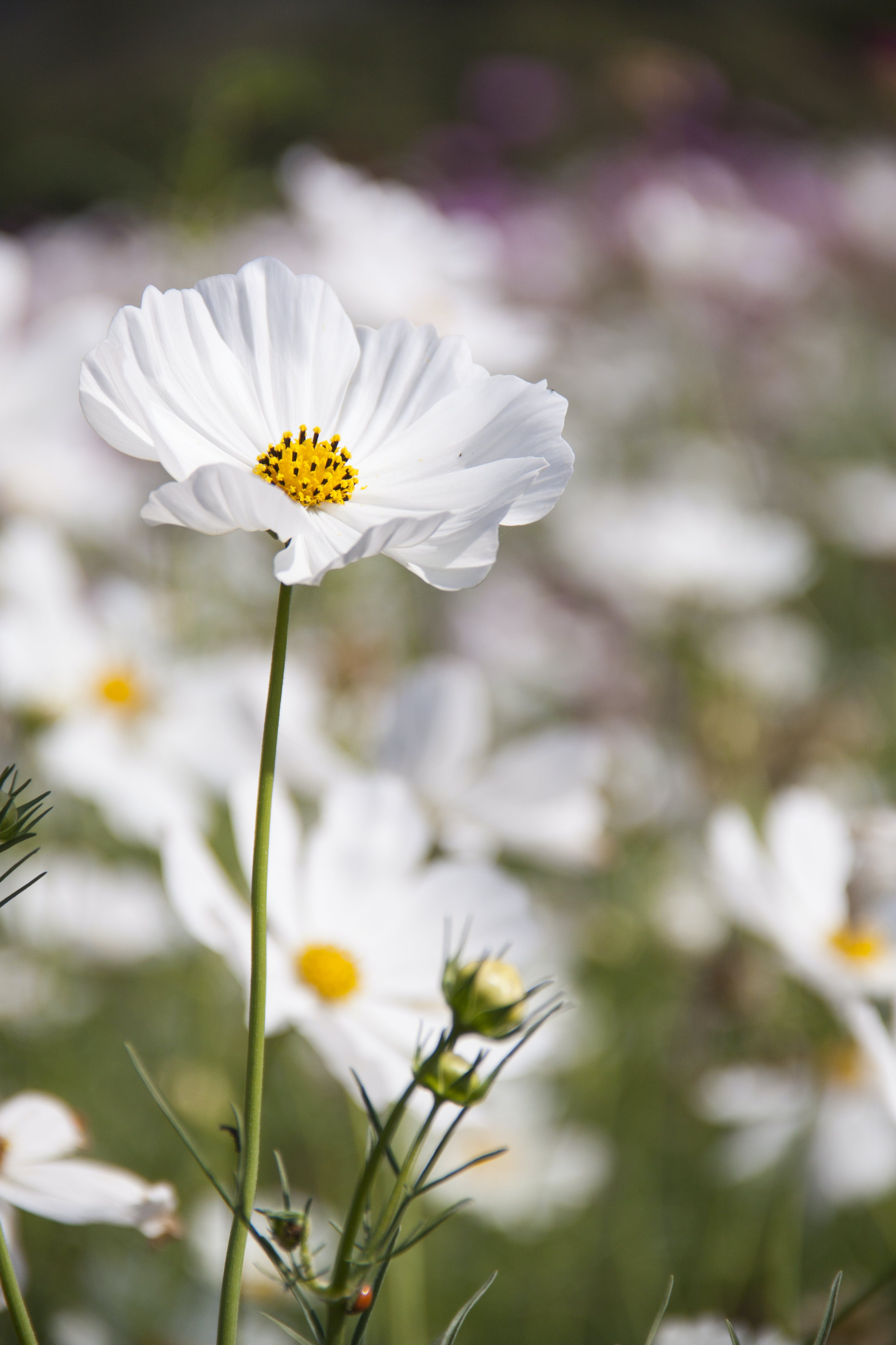 White Petaled Flower Field