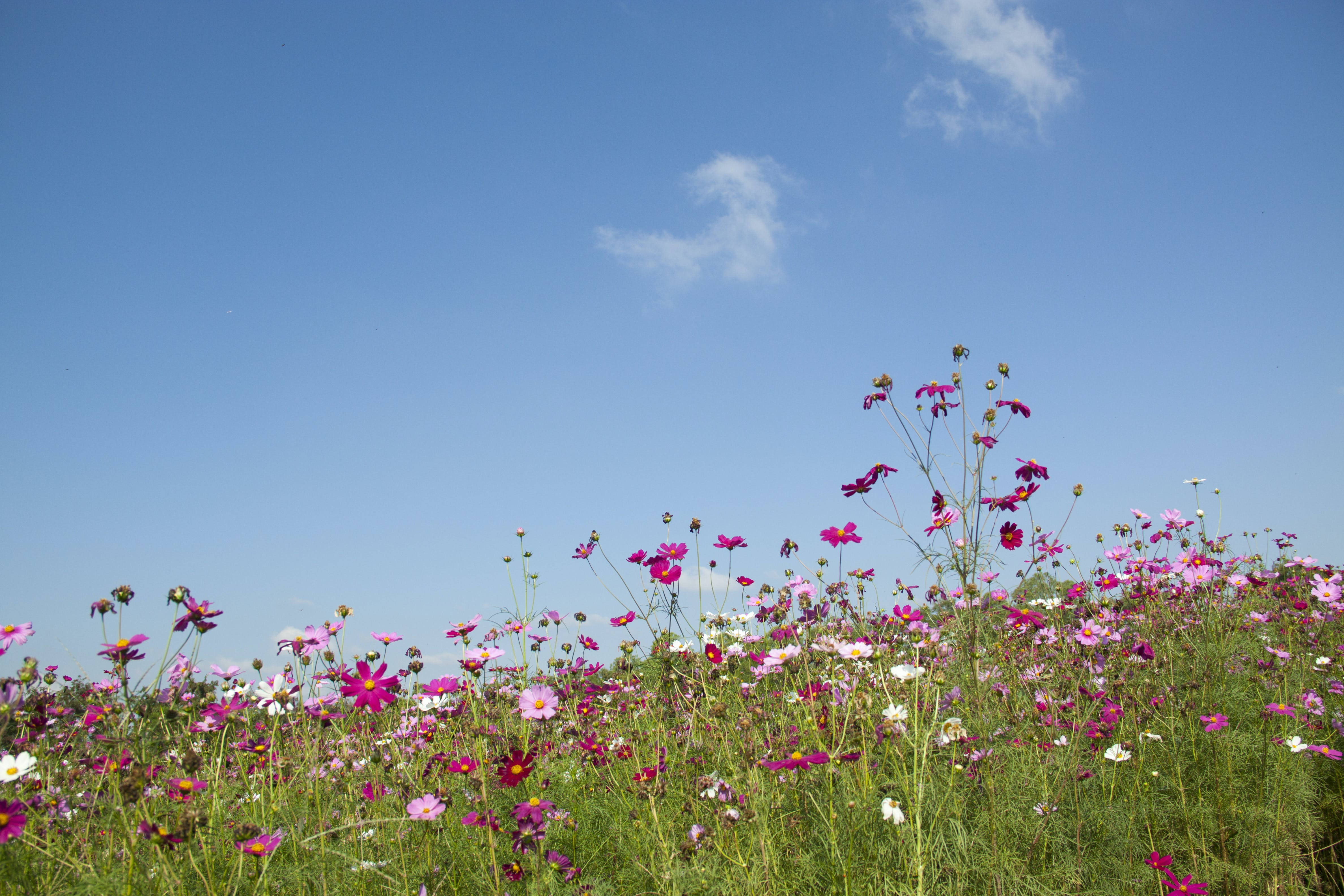 Purple and Pink Flowers Under White Clouds during Day Time