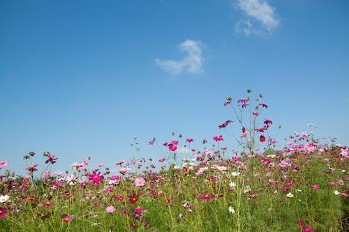 Ảnh lưu trữ miễn phí về hệ thực vật, Hình nền HD, hoa, hoa dại