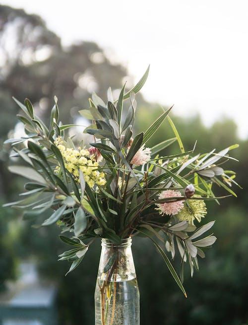 계절, 껍질, 꽃, 나무의 무료 스톡 사진