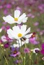 nature, flowers, plants