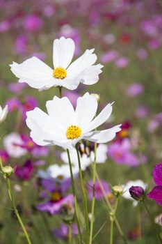 White Clustered Petal Flower