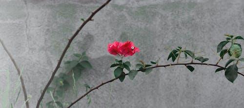 Ilmainen kuvapankkikuva tunnisteilla kasvi, kasvit, Kauneus, kauniit kukat