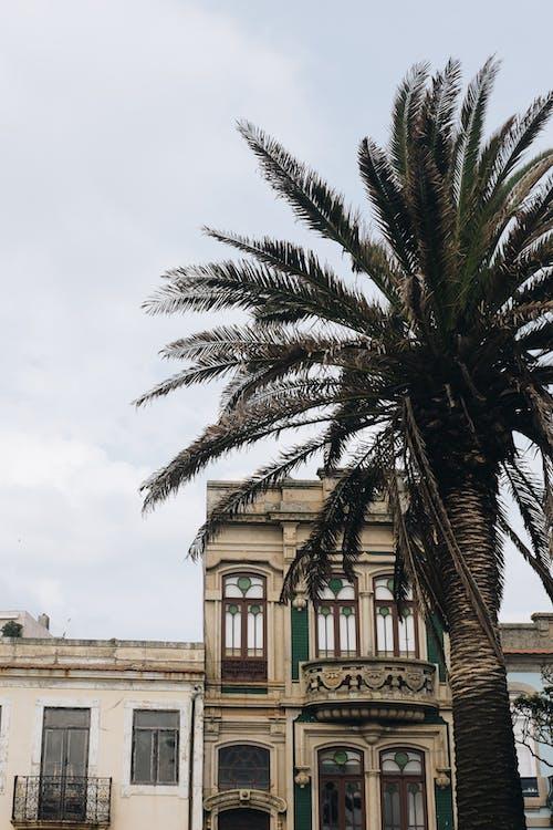 Green Palm Tree Across Concrete House