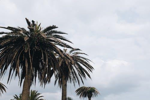 Δωρεάν στοκ φωτογραφιών με δέντρα, διακοπές, εξωτικός, ήλιος