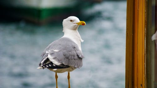 Kostnadsfri bild av djur, fiskmås, fjädrar, flyg