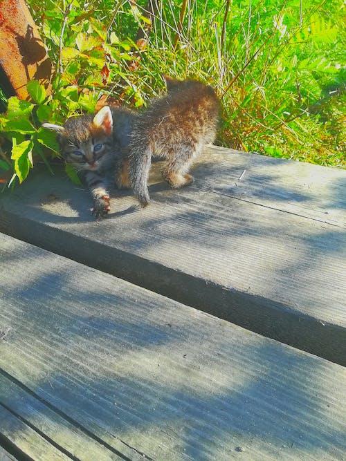Безкоштовне стокове фото на тему «#cats»