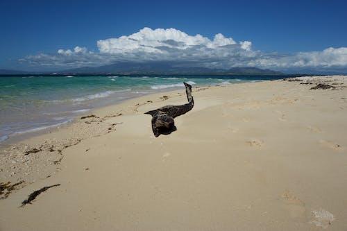 Darmowe zdjęcie z galerii z fala, fidżi, krajobraz, lato