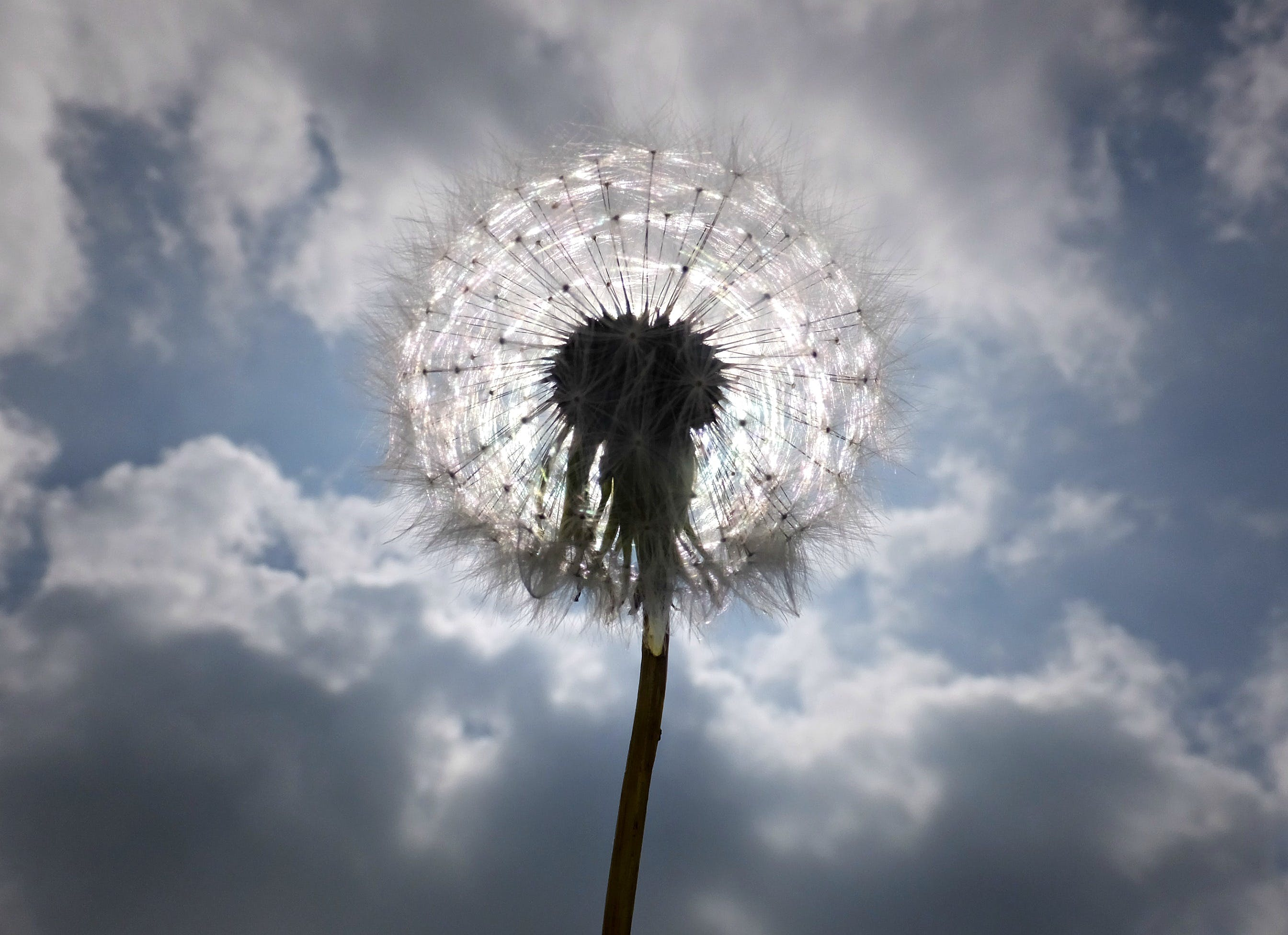 Free stock photo of clouds, cloudy, dandelion, dandelion seed