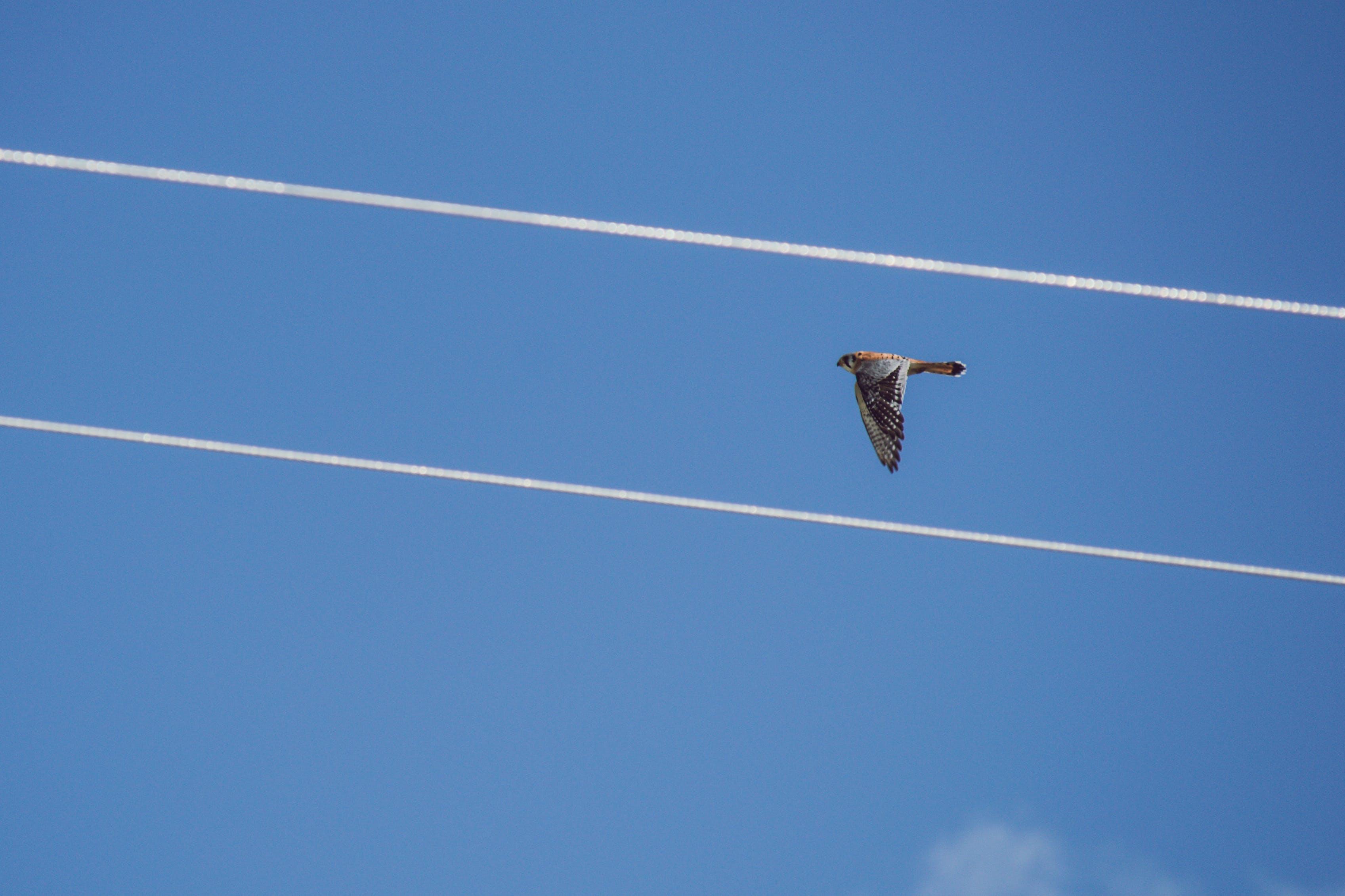คลังภาพถ่ายฟรี ของ กลางวัน, การบิน, คอนเทรล, ท้องฟ้า