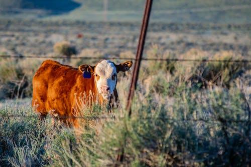 Foto stok gratis bidang, binatang, hayfield, kehidupan liar
