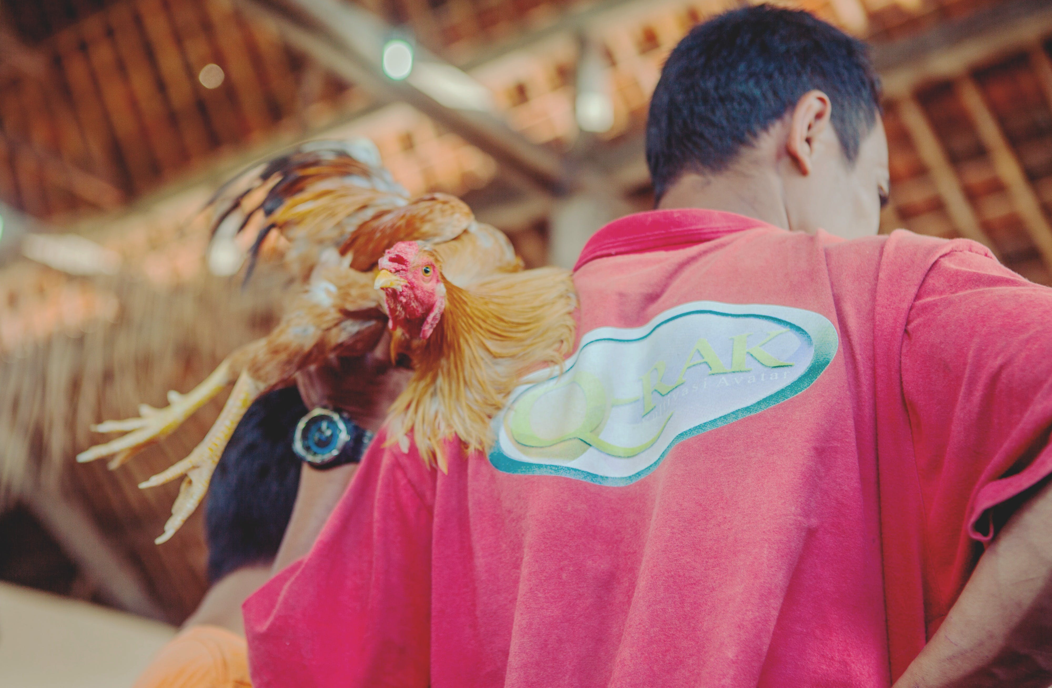 Men's Red Top and Brown Rooster