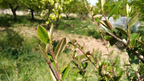 ağaç, alan, Bahçe, bitki örtüsü içeren Ücretsiz stok fotoğraf