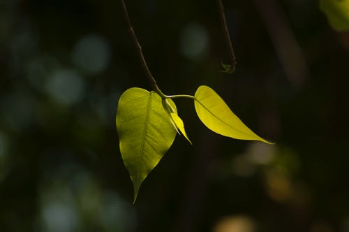 Ingyenes stockfotó levelek tavasszal témában