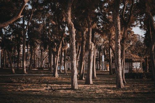 Gazebo Near Trees