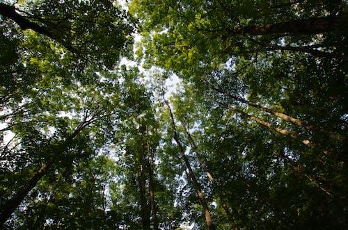 Imagine de stoc gratuită din arbori, codru, natură