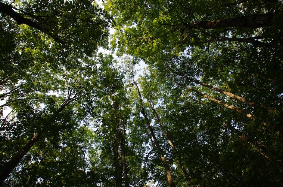 High Green Trees