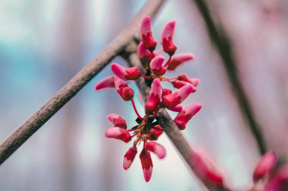 бутон, бутоны, весенние цветы