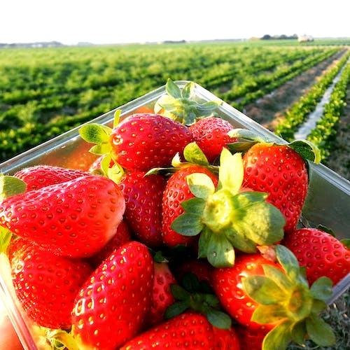 Immagine gratuita di agrume, colore, colori, fragola