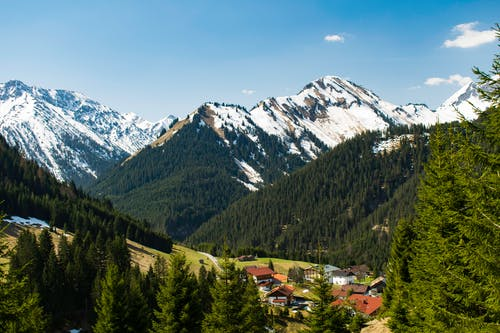 Immagine gratuita di abeti, alberi, alpi, ambiente