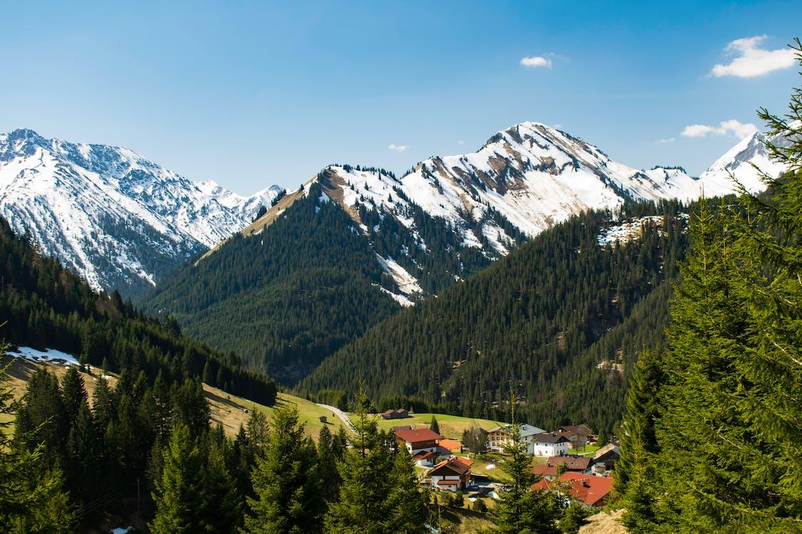 Alpok, erdő, fák