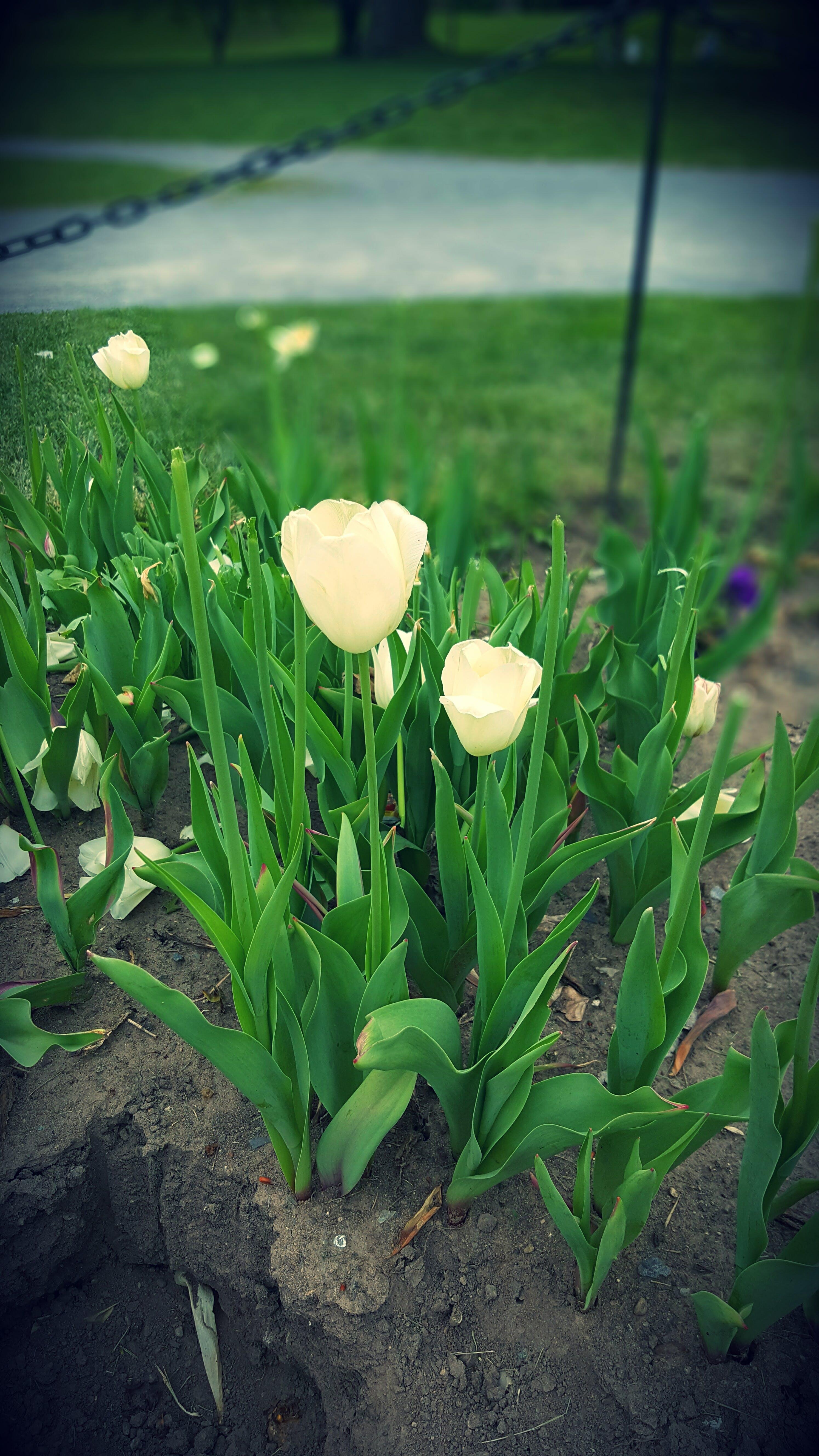 White Petal Flowers during Daytime