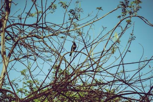 Immagine gratuita di alberi, albero, ambiente, azzurro