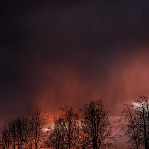 คลังภาพถ่ายฟรี ของ กลางคืน, ความมืด, ดราม่า, ต้นไม้