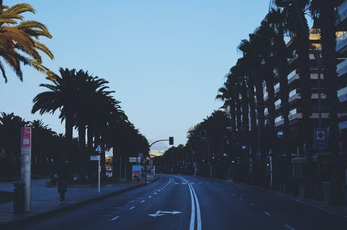 Free stock photo of car, cars, hotel, palm