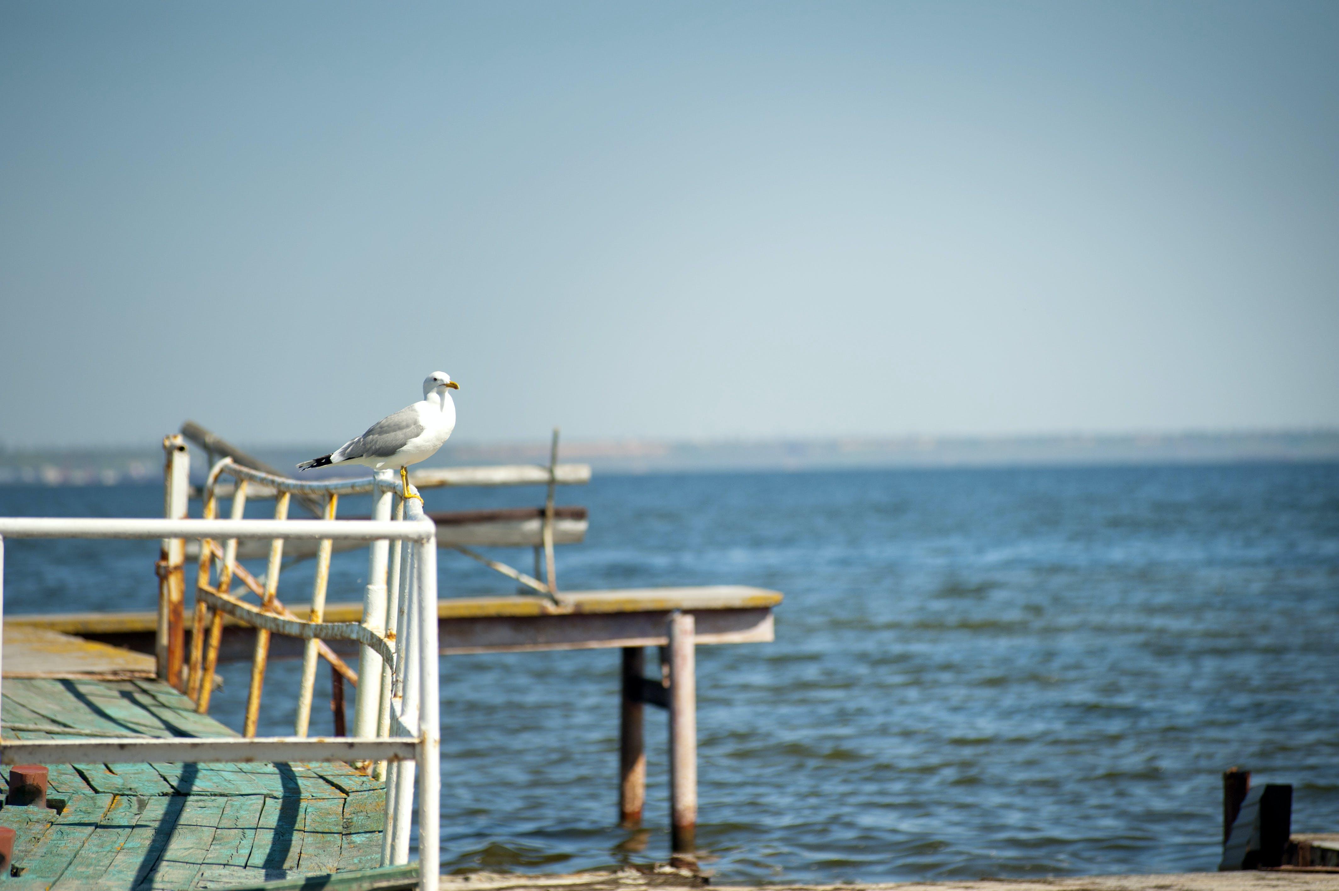 White Bird on Rail