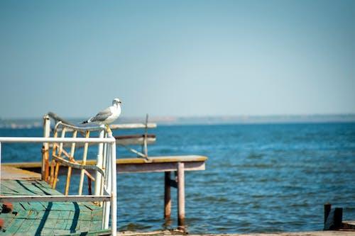 Foto profissional grátis de água, barco, beira-mar, cadeira