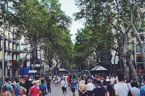 Ảnh lưu trữ miễn phí về các tòa nhà, cây, cộng đồng, đám đông