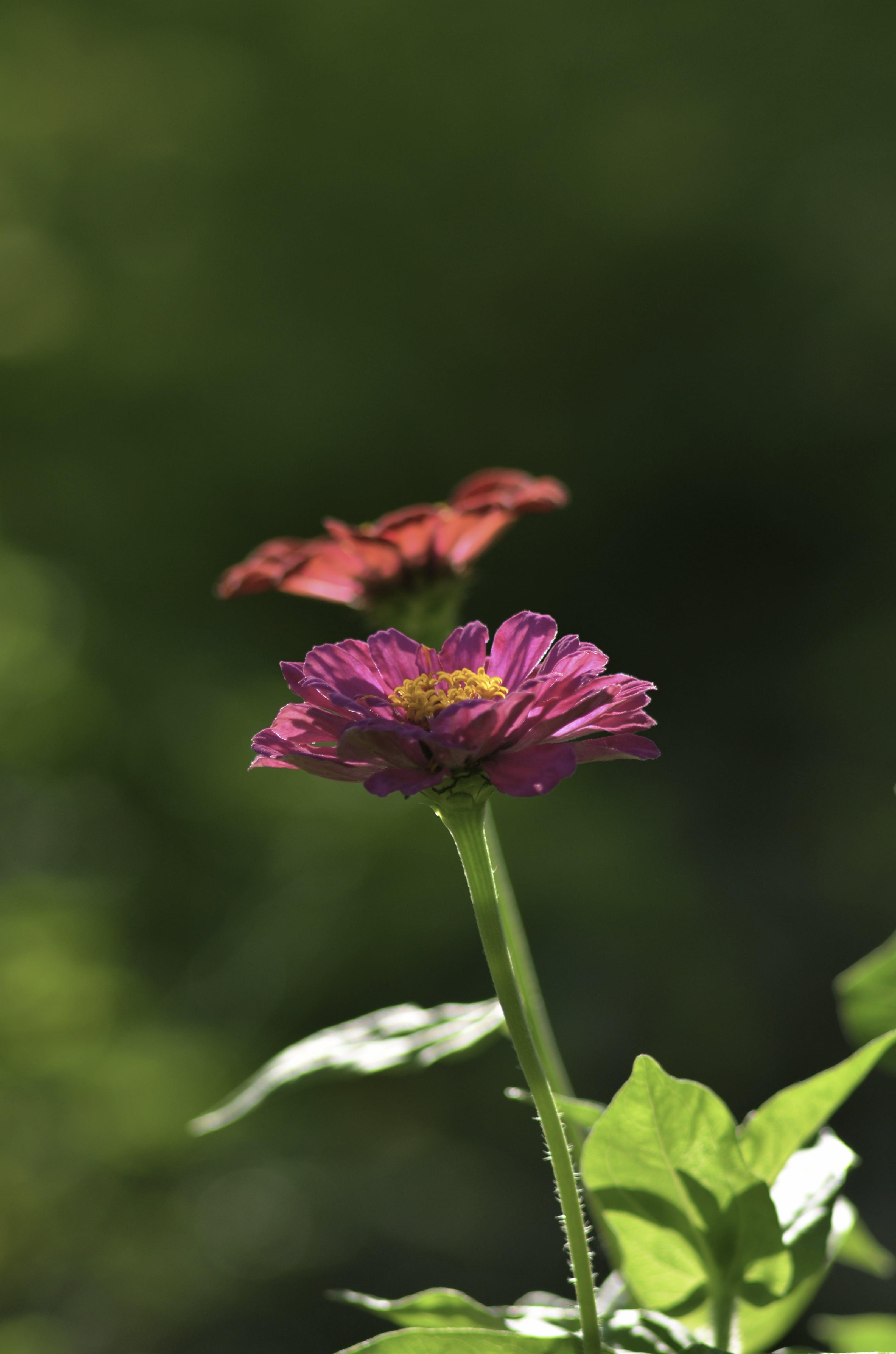 宏觀, 工厂, 植物群, 特寫 的 免费素材照片
