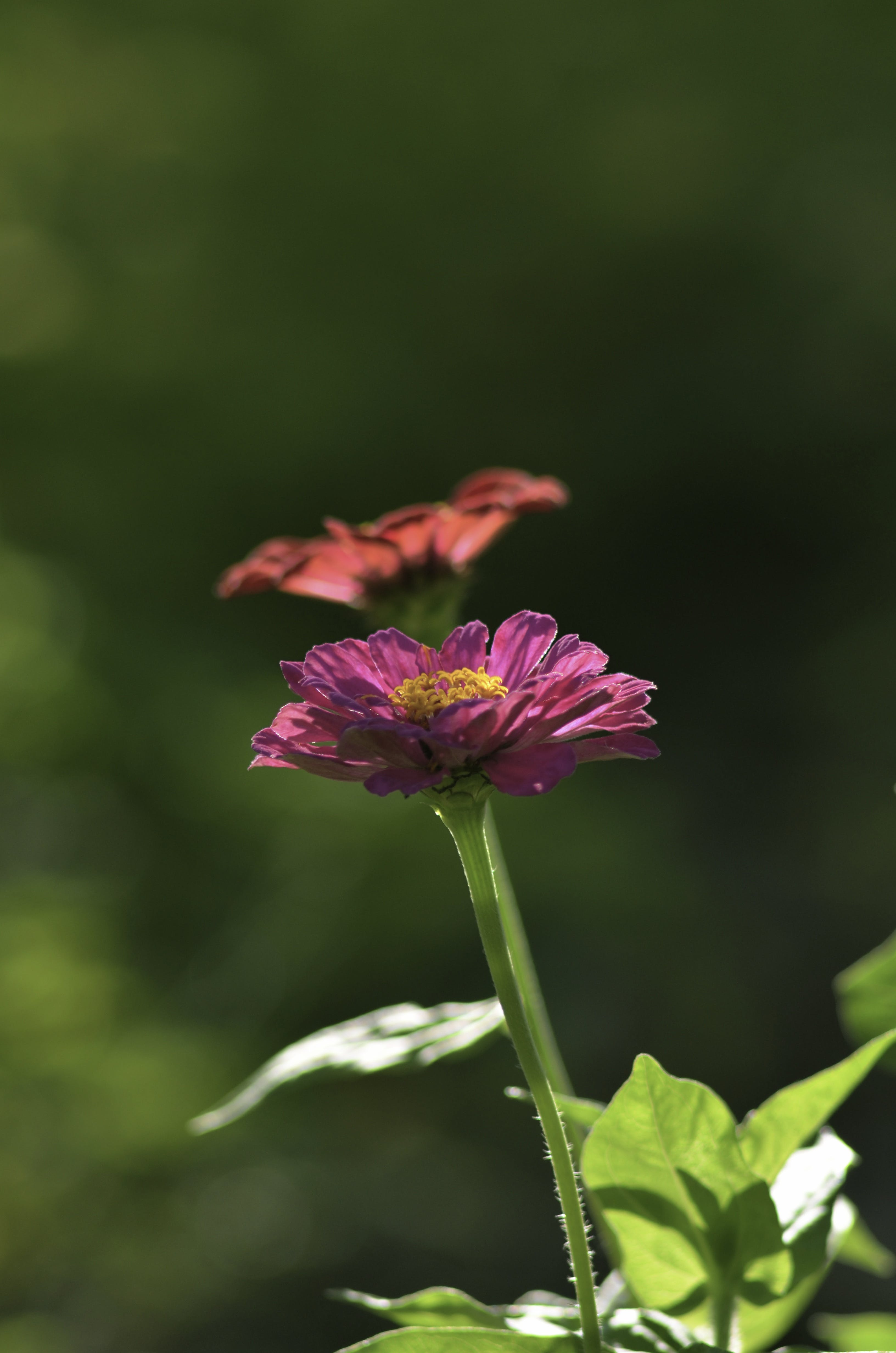 Close Up Photography of Purple Petaled Flower Near Orange Petaled Flower