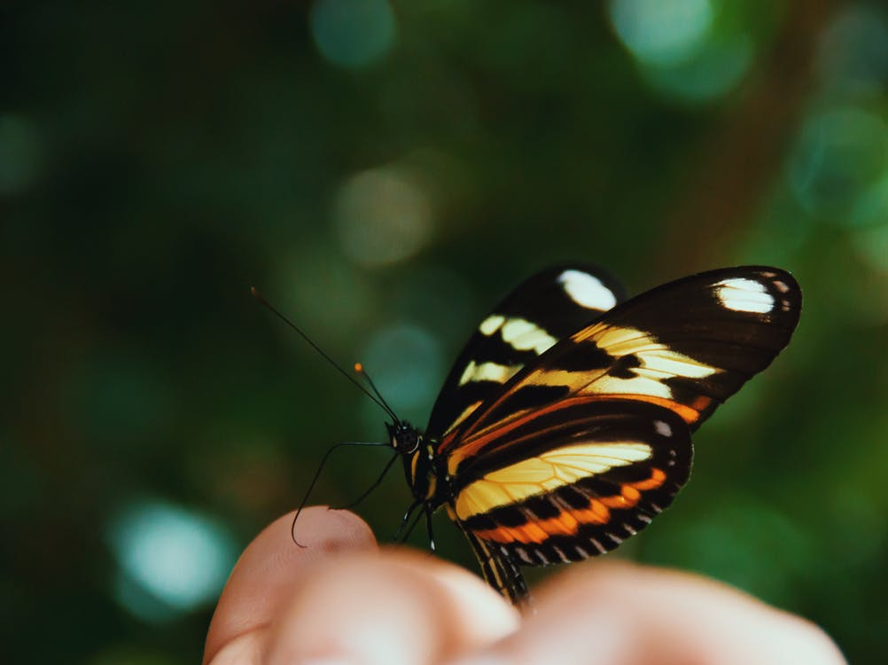 Macro Photography of Beige, Orange, White, and Black Butterfly on Human Hand