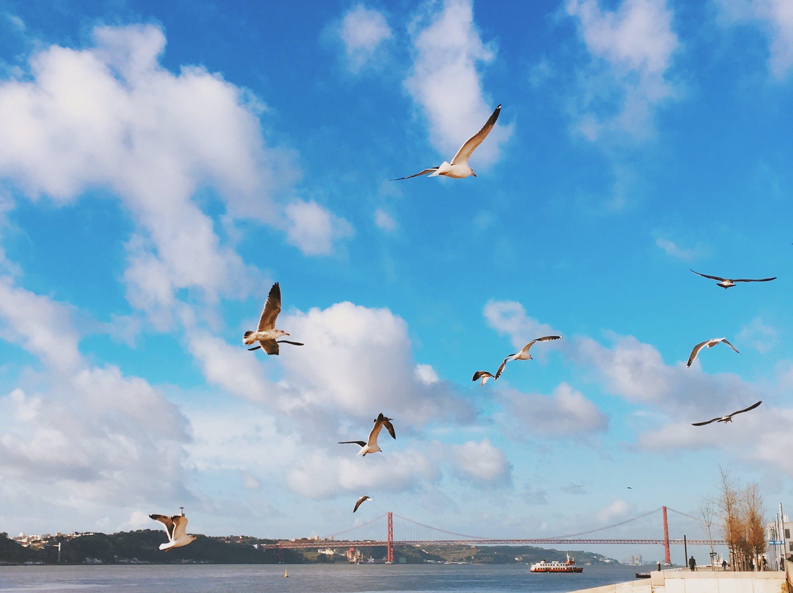 Free stock photo of 25 de abril bridge, Lisboa, Lisbon, ponte 25 de abril