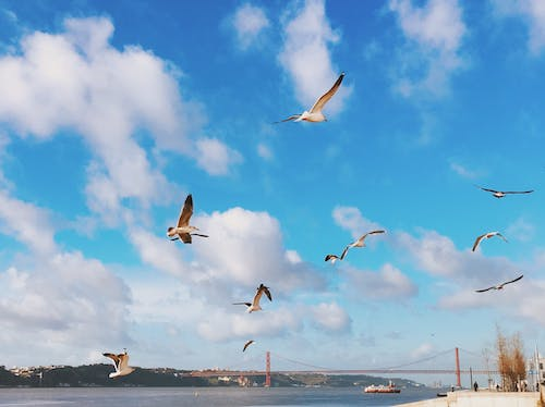 Free stock photo of 25 de abril bridge, Lisboa, Lisbon, ponte 25 de abril