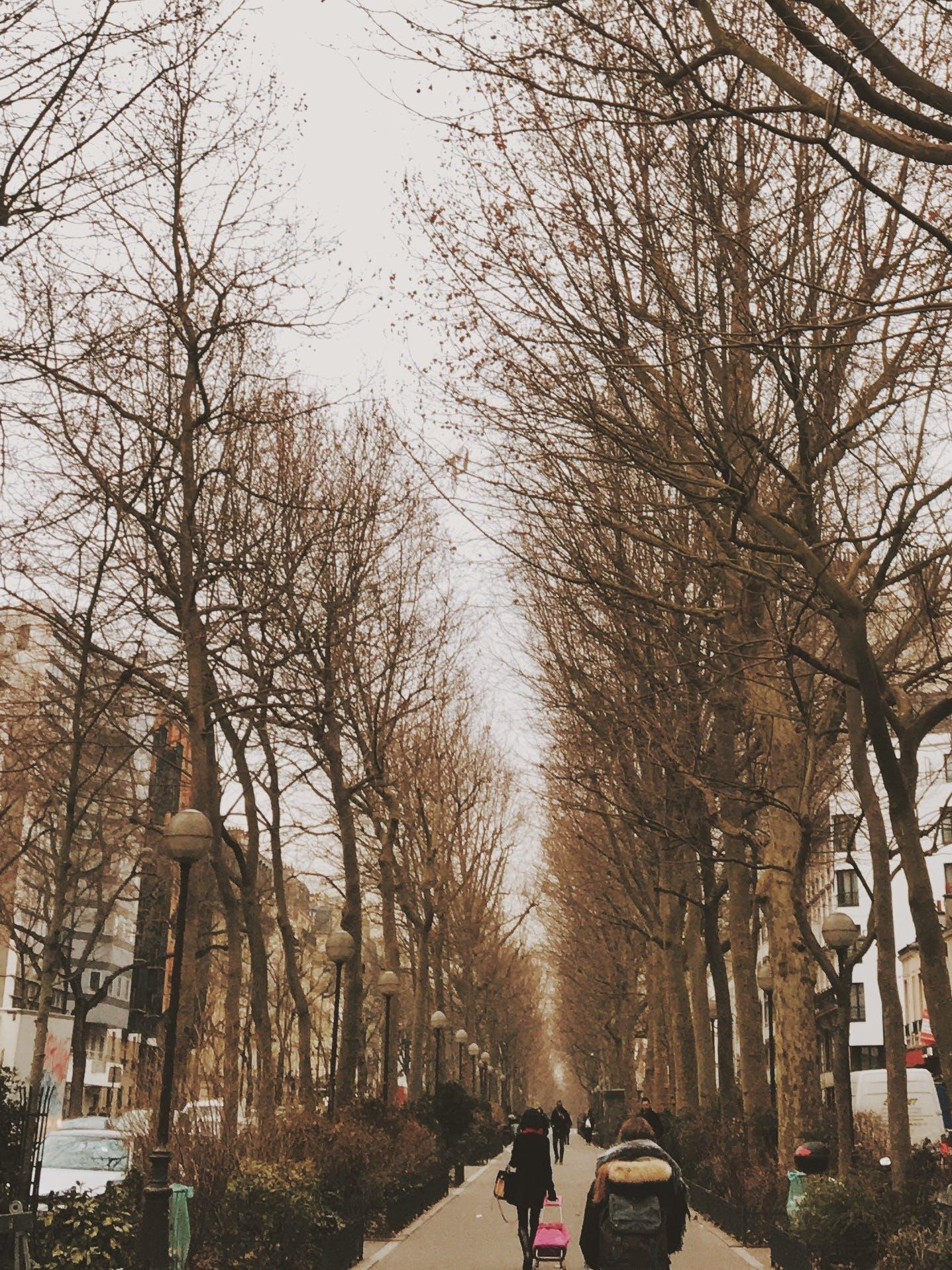 Free stock photo of paris, people, winter