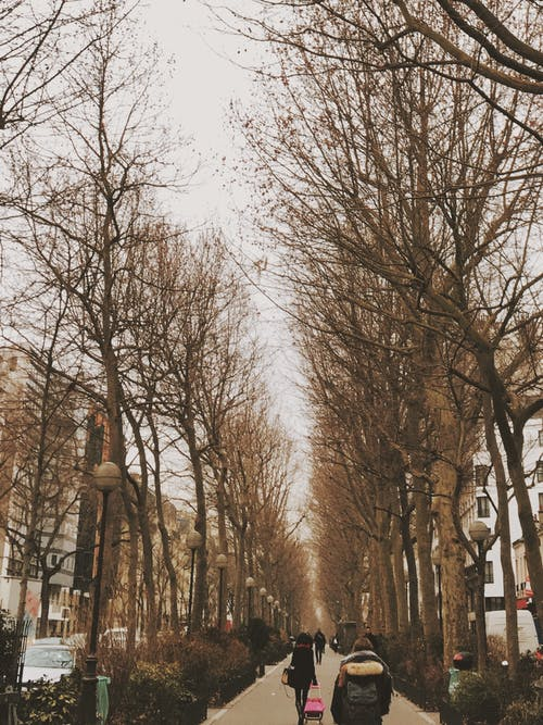 Free stock photo of paris, people, winter